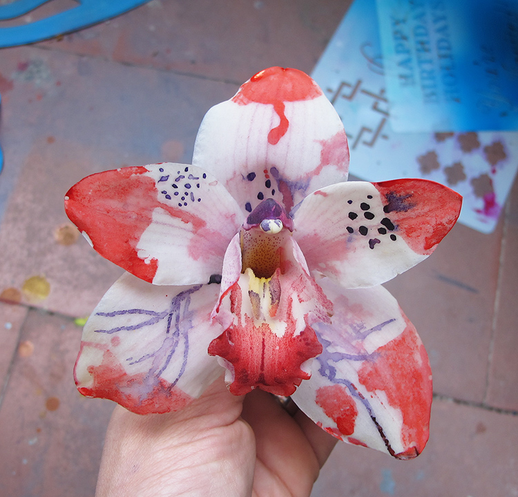 Cayena-Orchid1