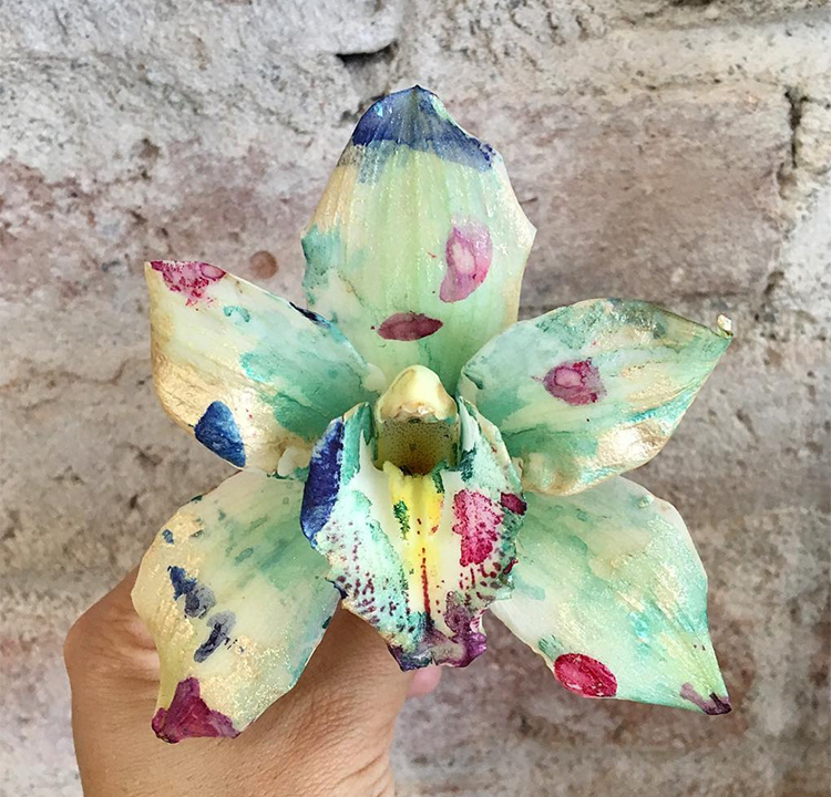 Cayena-Orchid3